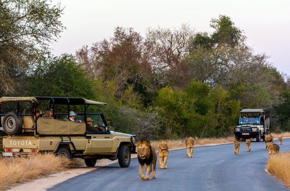 top african safaris