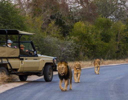 TINA Magazine - This Is New Africa!