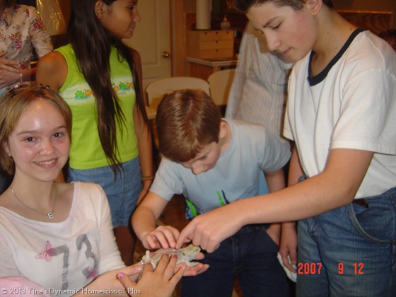 amphibians and reptiles homeschool co-op
