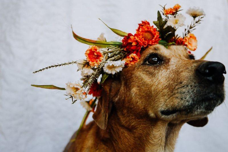 Diamond wearing her Dog Flower Crown