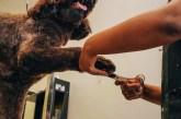 Tinatalksdogs grooming a dog