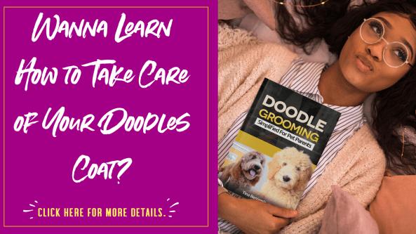 Doodle Grooming Guide