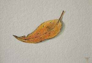 'Autumn Note', watercolour on paper by Tina Wilson