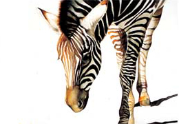 Watercolour painting of a zebra