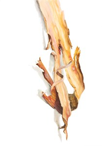 Watercolour painting of a piece of bark by Tina Wilson