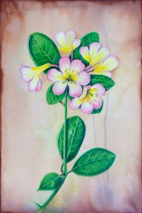 Watercolor painting of a frangipani flower