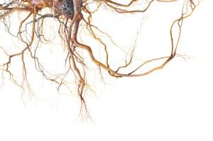 Watercolour painting of tangled lantana roots by Tina Wilson