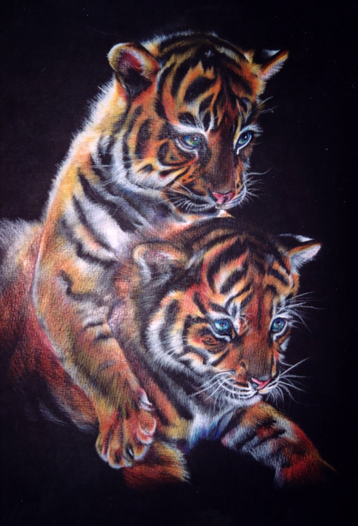 Colored pencil drawing of two tiger cubs