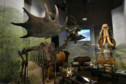 Prehistoric skeletons at the National Museum Cardiff - 5 Cardiff family attractions not to miss
