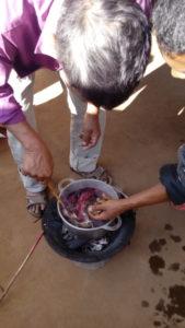 Essai de cochenille sur soie à Talata, Madagascar