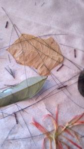 Détail de préparation d'ecoprint avec aiguilles de pin australien