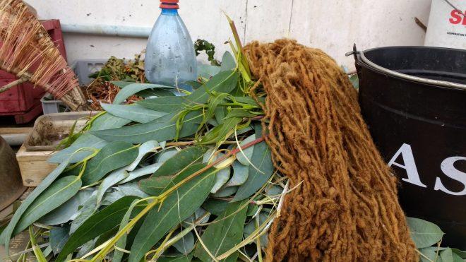 Teinture aux feuilles d'eucalyptus à Concón
