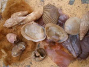 Coquillages teints avec les peaux d'oignons lors de l'atelier à la Esquina Encendida, Santa fe, Argentina