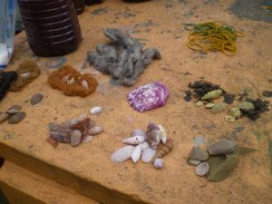 Coquillages teints avec diffèrentes plantes et de la cochenille pour le mauve, parfois avec des échantillons de laines qui les ont accompagnés lors de la teinture