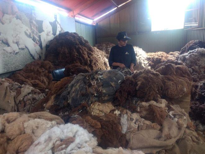Tri de la laine d'Alpaga par teintes chez Michel, leader de l'alpaga au Pérou