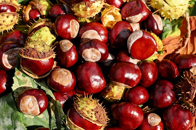 Can Dogs Eat Chestnuts