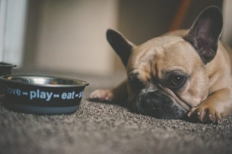 What High Calorie Dog Food Can Help Your Canine Gain Weight