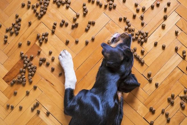 Good Dog Food