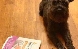 Dog CBD treats