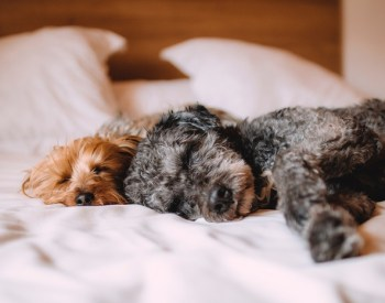 Tips for Calming an Anxious Dog