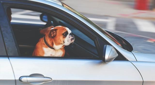 Pet-Friendly car