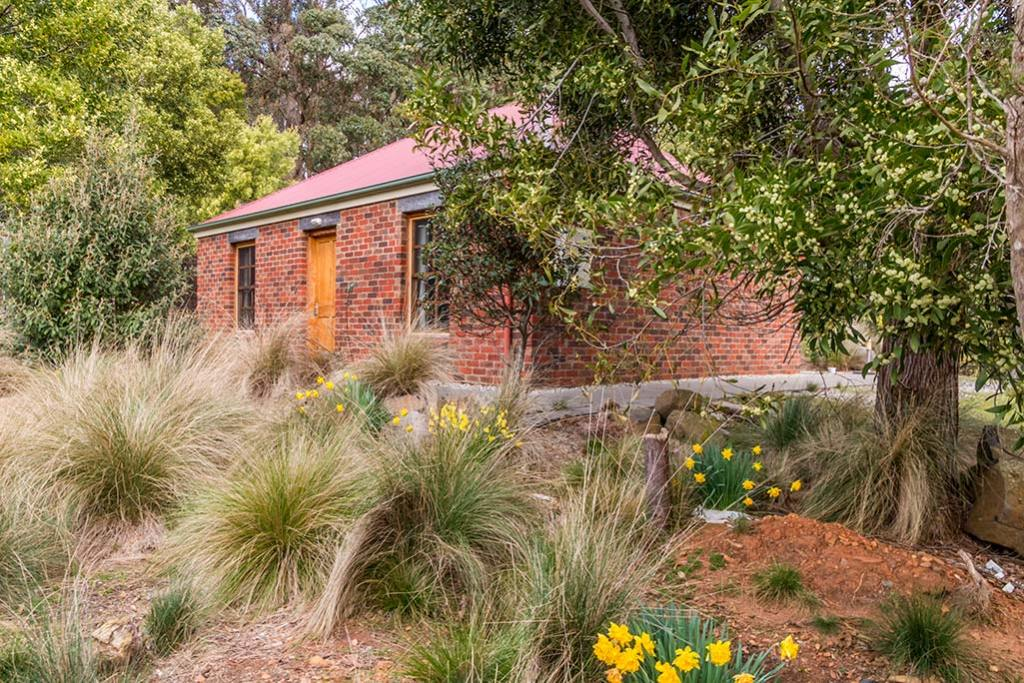 The spring garden surrounding the red-brick Ah Moy cottage shows the native Blackwood tree and daffodils in yellow blossom.