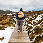 Graham walking along a boardwalk at Ronnys Creek, Cradle Mountain