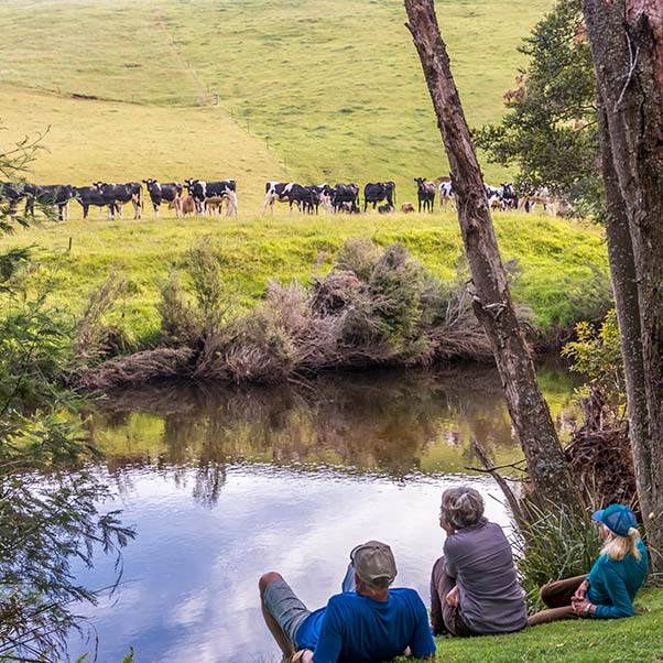 Three people are sitting on the river bank looking across to a herd of dairy cows on the opposite bank.