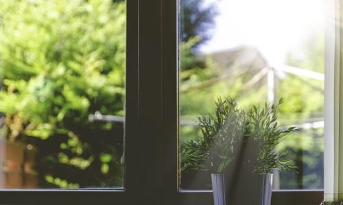 Fenster pflanze