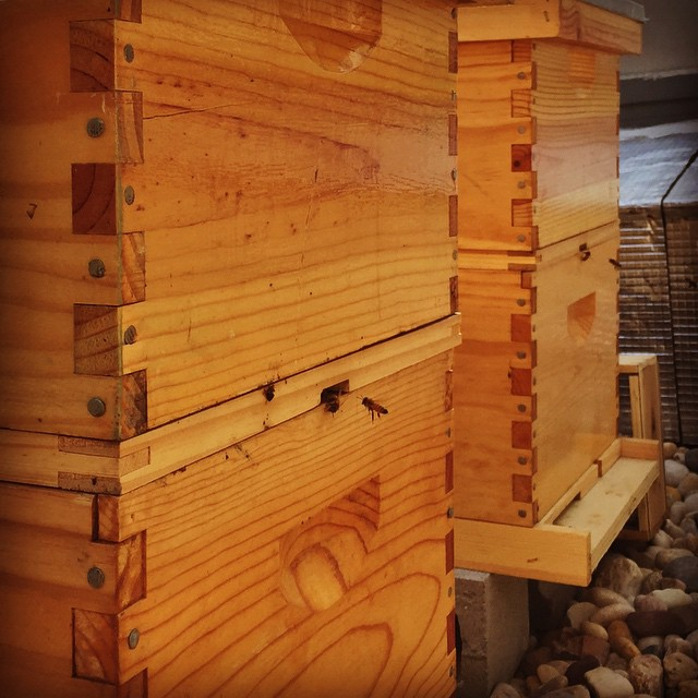 Bee hives on the roof of our building,