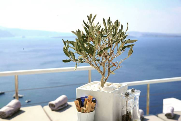 Breakfast by the olive tree, Canaves Oia, Luxury Resorts and Villas, Santorini