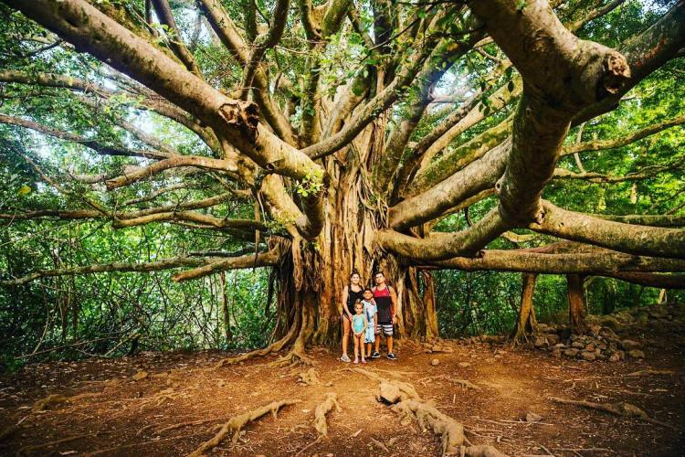 Family portrait under a giant banyan tree on the Pipiwai Trail, Haleakalā National Park