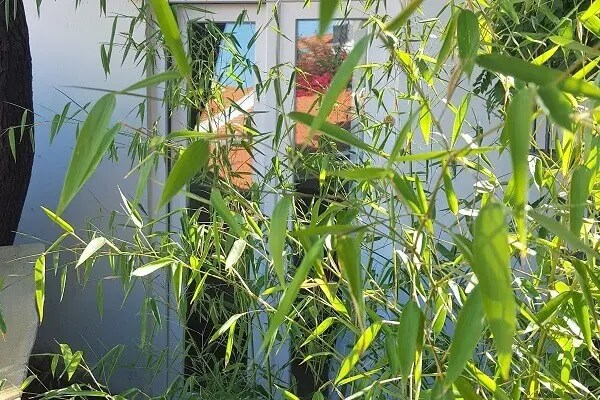 Garden Corner at Tings Lisbon - hidden behind Bamboo