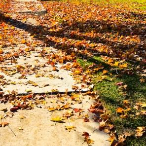 fall-012