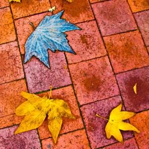 fall-07