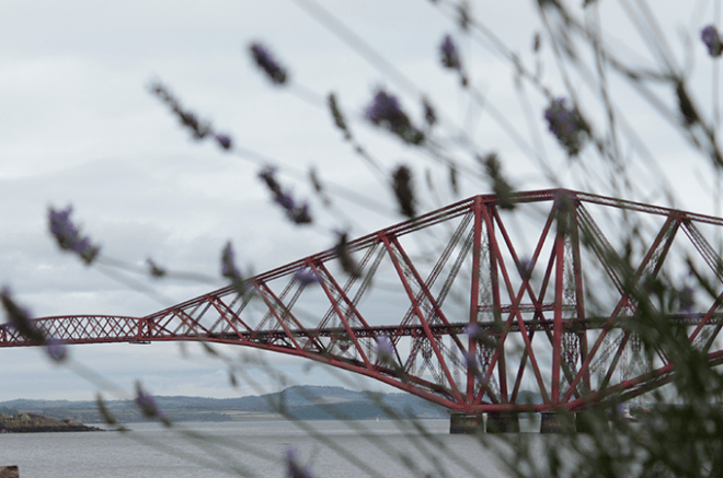 Forth Bridge e lavandas na frente