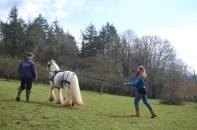 Long reining lesson