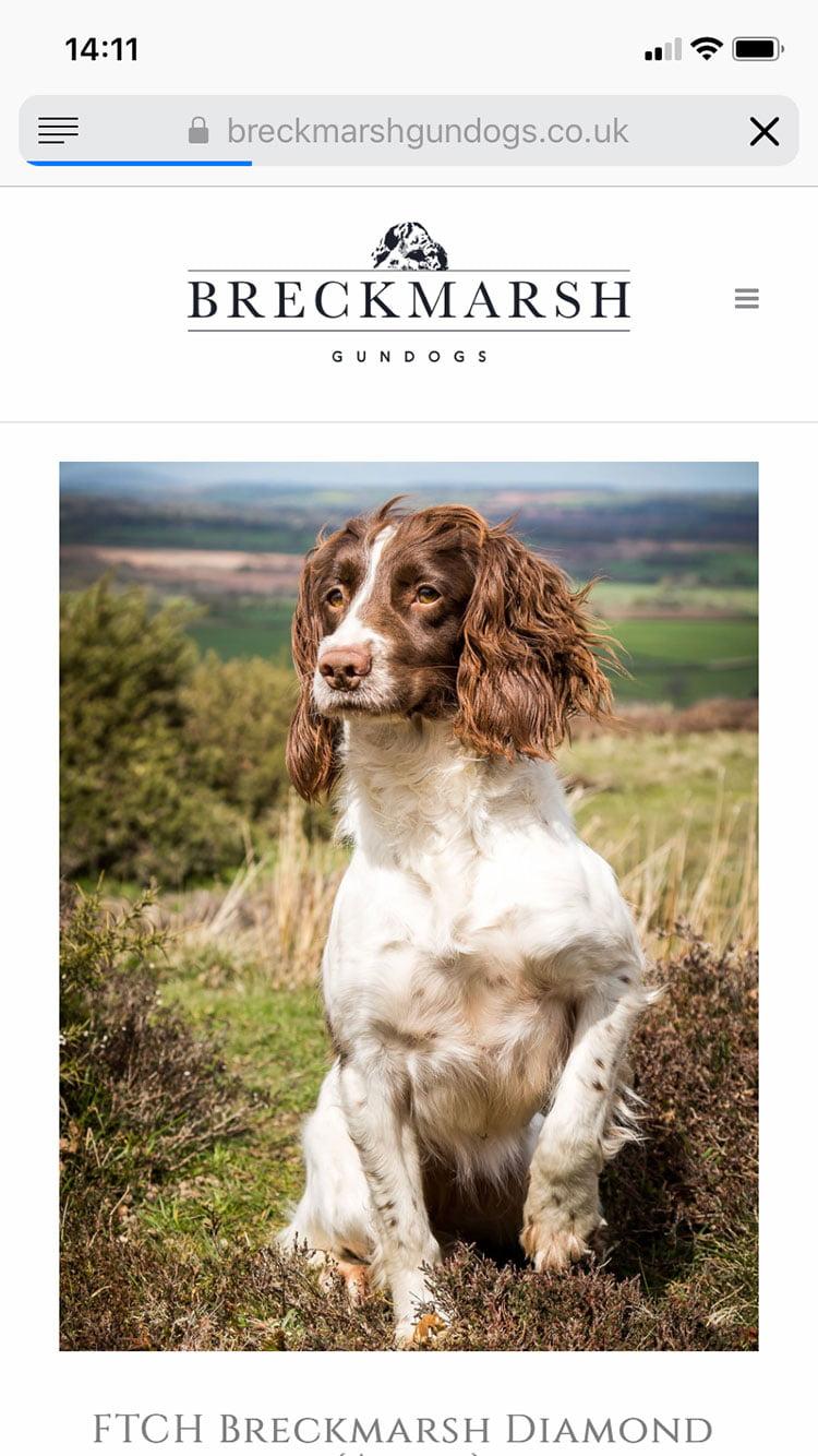 breckmarsh-gundogs-website-design-03