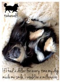 tinkerwolf dog photo quotes 21 My dog made me smile