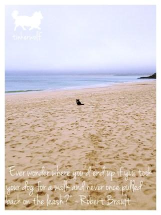 tinkerwolf dog photo quotes 33 Ever wonder where