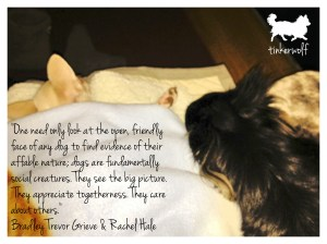 tinkerwolf dog photo quotes 33 One need only look