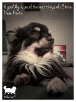 tinkerwolf dog photo quotes 36 A good dog