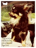 tinkerwolf dog photo quotes 39 Dogs are not our whole life