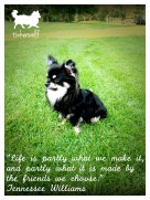 tinkerwolf dog photo quotes 62 Life is partly what we make it