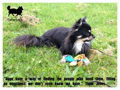 tinkerwolf dog photo quotes 71 Dogs have a way of finding