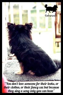 tinkerwolf-dog-photo-quotes-76-a-song-only-you-can-hear