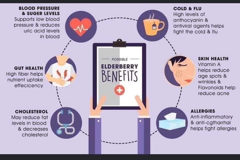 The Benefits of Elderberries Infographic