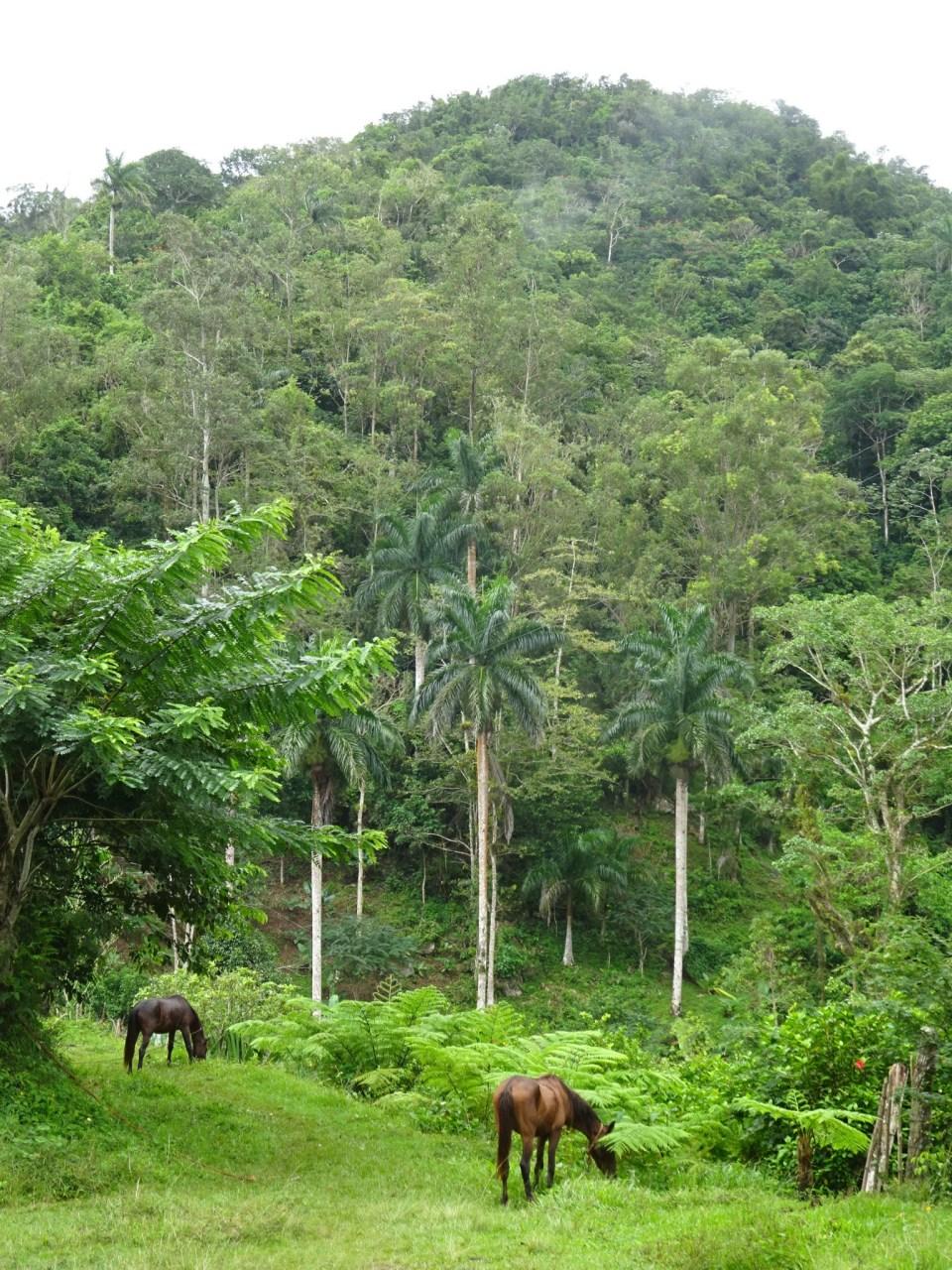 Pferde im Dschungel