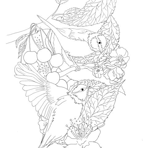 Lineart illustration - Swedish birds