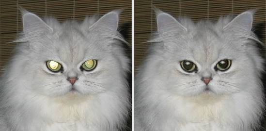https://i1.wp.com/tintguide.com/image/program/fix-red-eye-cat.jpg?w=640